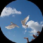 dove-release-losangelesyachtcharter