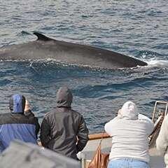 Fin-Whale-losangelesyachtcharter