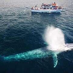 blue-whale-losangelesyachtcharter