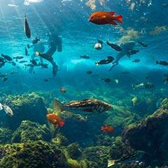 catalina-island-diving-losangelesyachtcharter