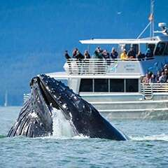 humpback-whale-losangelesyachtcharter