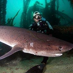 la-jolla-diving-losangelesyachtcharter