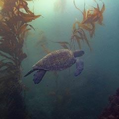 laguna-beach-diving-losangelesyachtcharter