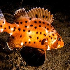 redondo-beach-diving-losangelesyachtcharter